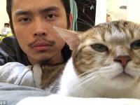 gatto-ritmo-musica